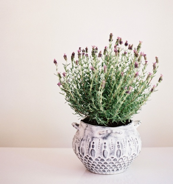 diy, diy mondays, diy weddings, fresh lavender, wedding centerpieces